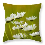 Cheerful Daisy Wildflowers Blowing In The Wind Throw Pillow
