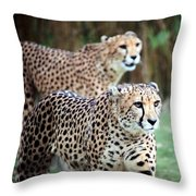 Cheetah Brothers Throw Pillow