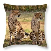 Cheetah Chat 1 Throw Pillow