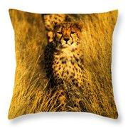 Cheetah Cubs Throw Pillow