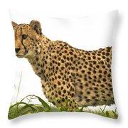 Cheetah Hunting Throw Pillow