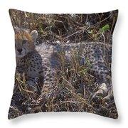 Cheetah Kitten Throw Pillow