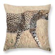 Cheetah Stepping Out Throw Pillow
