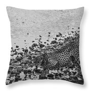 Cheetah Tip Toes For A Drink Throw Pillow