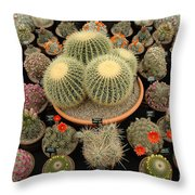 Chelsea Flower Show Cacti Display Throw Pillow