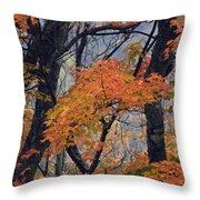 Cherohala Maple - D007676 Throw Pillow