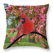 Cherry Blossom Cardinal  Throw Pillow