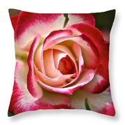 Cherry Vanilla Rose Throw Pillow