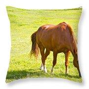 Chestnut Grazing Throw Pillow