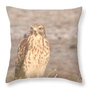 Chicken Hawk 1 Throw Pillow