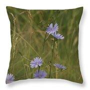 Chicory 2765 Throw Pillow