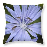 Chicory For Three Throw Pillow