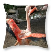 Chilean Flamingo Throw Pillow