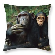 Chimpanzee Adult Female With Orphan Baby Throw Pillow