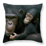 Chimpanzee Pan Troglodytes Adult Female Throw Pillow