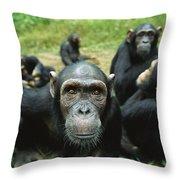 Chimpanzee Pan Troglodytes Female Throw Pillow