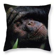 Chimpanzees, As Reported By Jane Throw Pillow