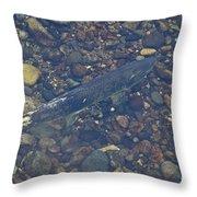 Chinook Salmon Throw Pillow