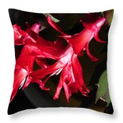 Christmas Cactus Trio Throw Pillow
