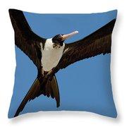 Christmas Island Frigatebird Fregata Throw Pillow