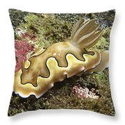 Chromodoris Coi Beige Nudibranch Throw Pillow