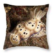 Chromodoris Kunei Nudibranch Carrying Throw Pillow