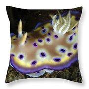 Chromodoris Kuniei Nudibranch, North Throw Pillow