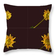 Chrysanthemum Blooming Sequence Throw Pillow