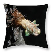 Cicada - First In Series Throw Pillow