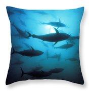 Circling Bluefin Tuna Throw Pillow