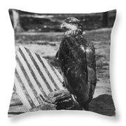 Civil War: Eagle Mascot Throw Pillow