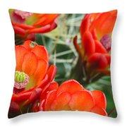 Claret-cup Cactus 2am-28736 Throw Pillow