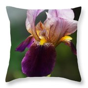 Classic Purple Two-tone Dutch Iris Throw Pillow