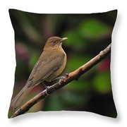 Clay-coloured Robin Throw Pillow