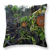 Clear Cut Red Mangrove Stand Throw Pillow