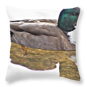 Clear Reflection Throw Pillow