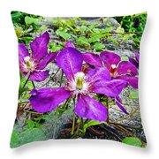 Clematis Abby Aldrich Rockefeller Garden Throw Pillow