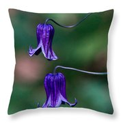 Clematis Integrifolia Rooguchi 3 Throw Pillow