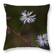 Climbing Aster Throw Pillow