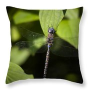 Cling Throw Pillow