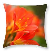 Clivia In The Conservatory Throw Pillow