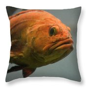 Close And Fishy Throw Pillow
