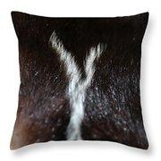 Close Skunk Encounter Throw Pillow