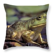 Close-up Of A Bullfrog Throw Pillow