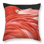 Close Up Of A Flamingo Resting Its Head Throw Pillow