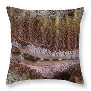 Close-up Of A Goby, Indonesia Throw Pillow