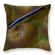 Close-up Of A Goby On Coral, Belize Throw Pillow