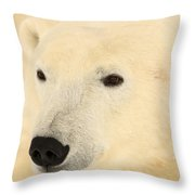 Close Up Of A Polar Bear, Churchill Throw Pillow