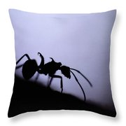 Close-up Of A Silhouetted Ant Throw Pillow