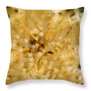 Close-up Of A Starfish Mouth Throw Pillow